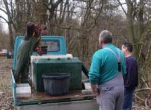 Fischlieferung-4.4.2004-Lehnheim01